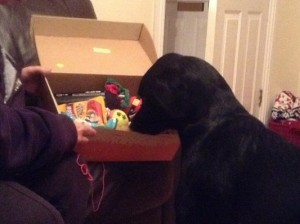 Gunner getting stuck into his goody box!